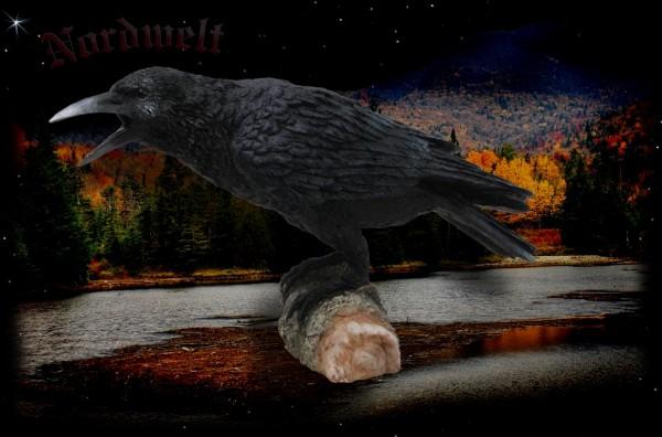 Odin's Raven on branch