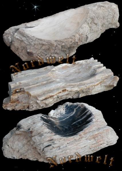 Schale aus versteinertem Holz viele Millionen Jahre alt.