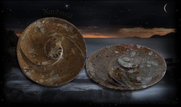 Fossilien Ammonit Teller versteinerte Fossilie