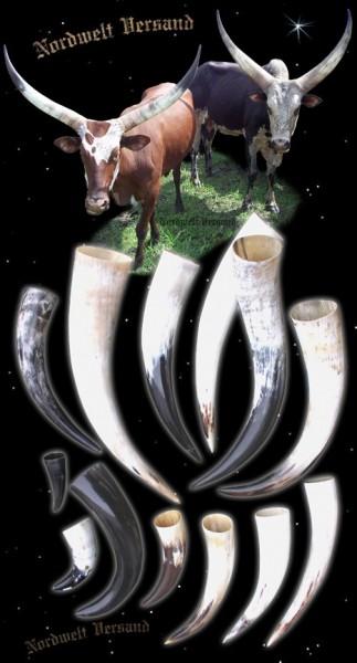 Trinkhörner Methorn - verschiedene Größen