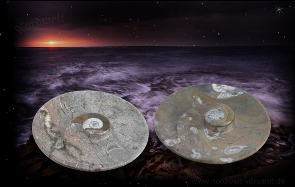 Fossilien Ammonit- Teller versteinert Fossilie Versteinerungen