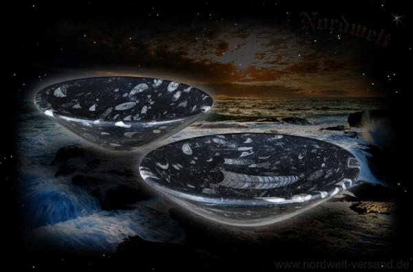 Schüssel Orthoceras Schale versteinerte Fossilie