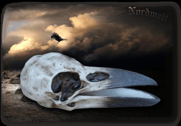 Dose Raben-Schädel Schmuckdose aus Polyresin Skull