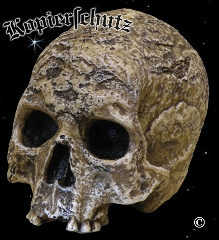 Totenschädel Skull Totenkopf Polyresin Schädel nachempfunden