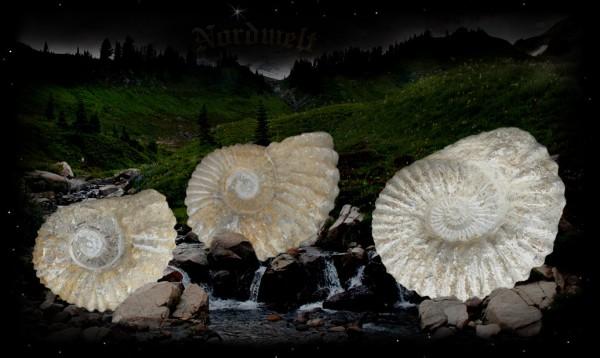 Ammonit Schutzsymbol aus Kalkstein versteinte Fossilien Kopffüssler Schutz von Heim und Hof