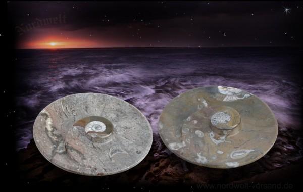 Fossilien Ammonit- Teller KLEIN