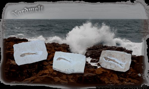 versteinerter Fisch Fossil auf Naturstein Dastilbe Millionen Jahre alt Geschenkidee